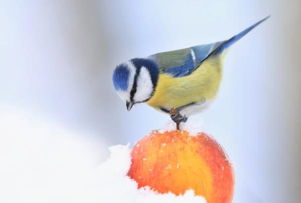 Winter Sale! Fruit presses - cider press - fruit crushers - bird picking apple