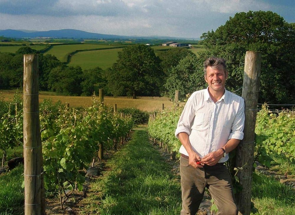 Toby in Winkleigh vineyard