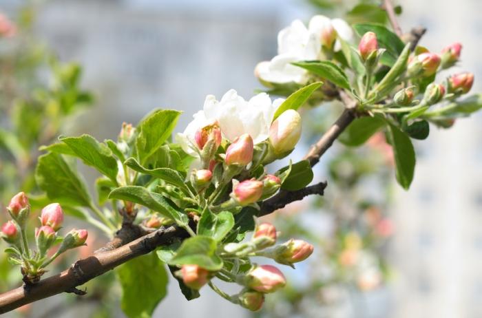Fruit presses, apple presses at excellent prices